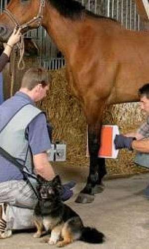 Raio x portátil veterinário